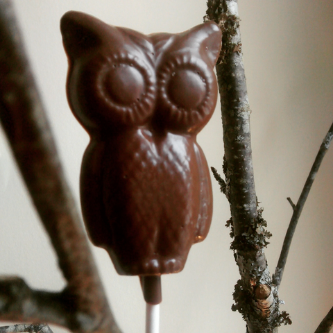 Chocolate owl lollie