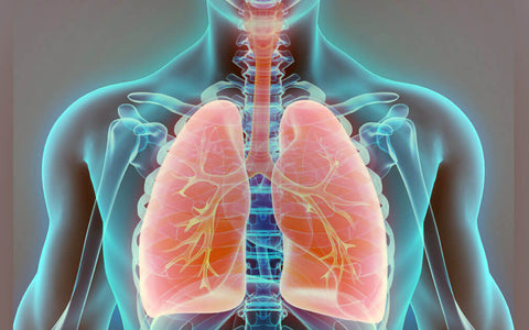 coenzyme Q10 protect the lungs