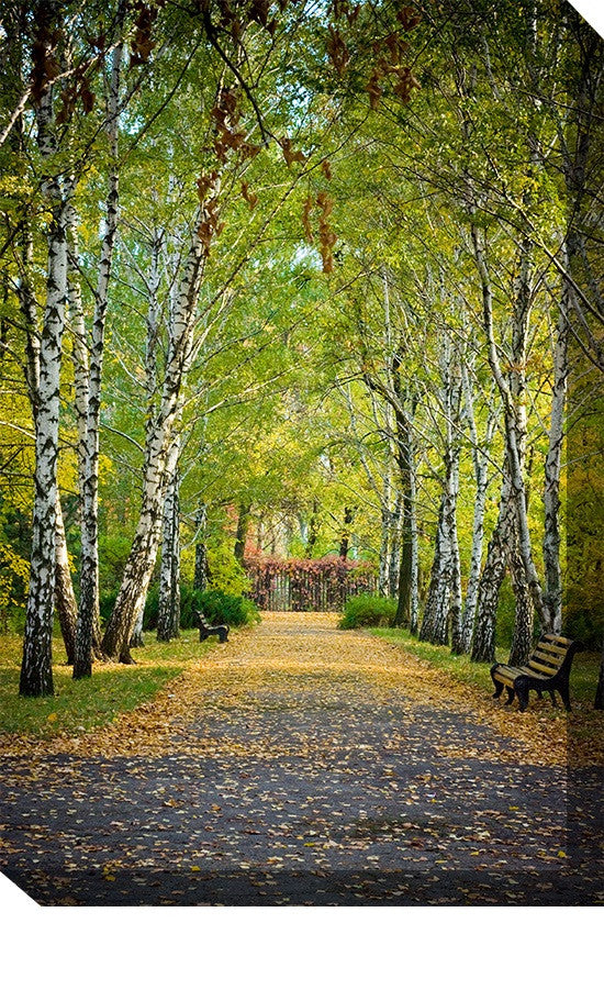Birch Trail Outdoor Canvas Art - Premier Home & Gifts