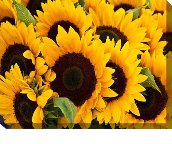 Sunflowers Outdoor Canvas Art - Premier Home & Gifts