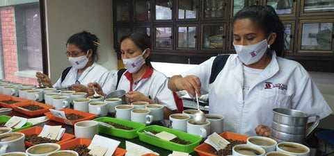 coffee cupping brewing tasting colombia organic caficauca