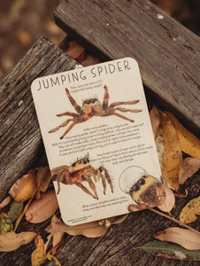 JUMPING SPIDER FUN FACTS TILE plus COLOUR IN PRINTABLE