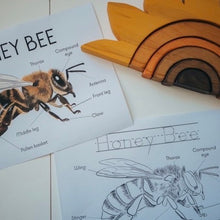 Load image into Gallery viewer, Honey Bee Anatomy Print with bonus colouring sheet (A4)