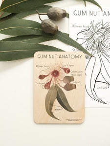 Gum Nut Anatomy Wooden Tile + Matching Colouring In Card