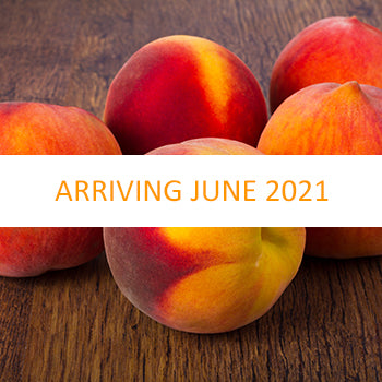 Georgia Peaches (June/August)