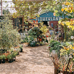 LOCAL GEMS SPOTLIGHT:  Flowerland