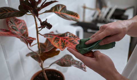 wiping leaves