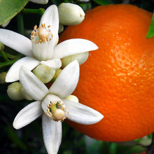 Load image into Gallery viewer, Orange Blossoms 6oz tin Fundraiser candle
