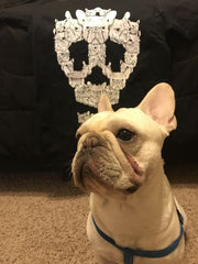 French Bulldog Skull