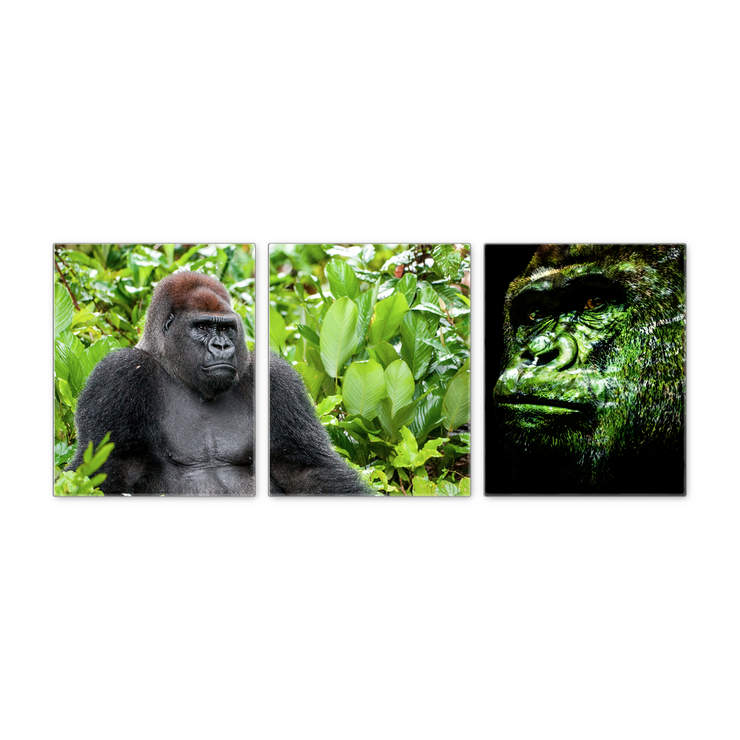 16x20 - Gorillas In The Jungle Canvas Wall Art - Set Of 3