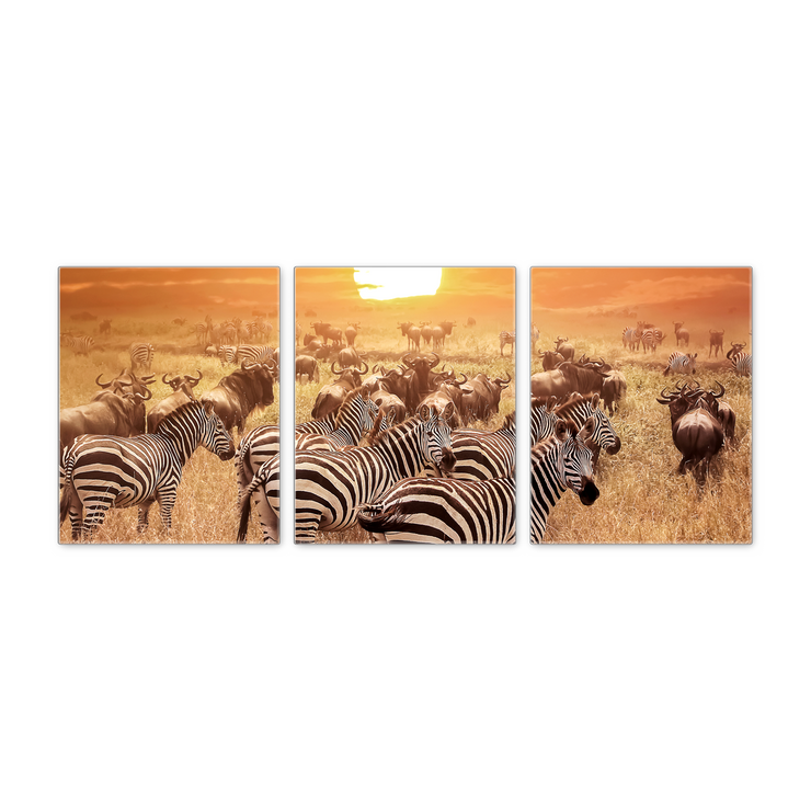 16x20 - Zebras At Sunset Canvas Wall Art - Set Of 3