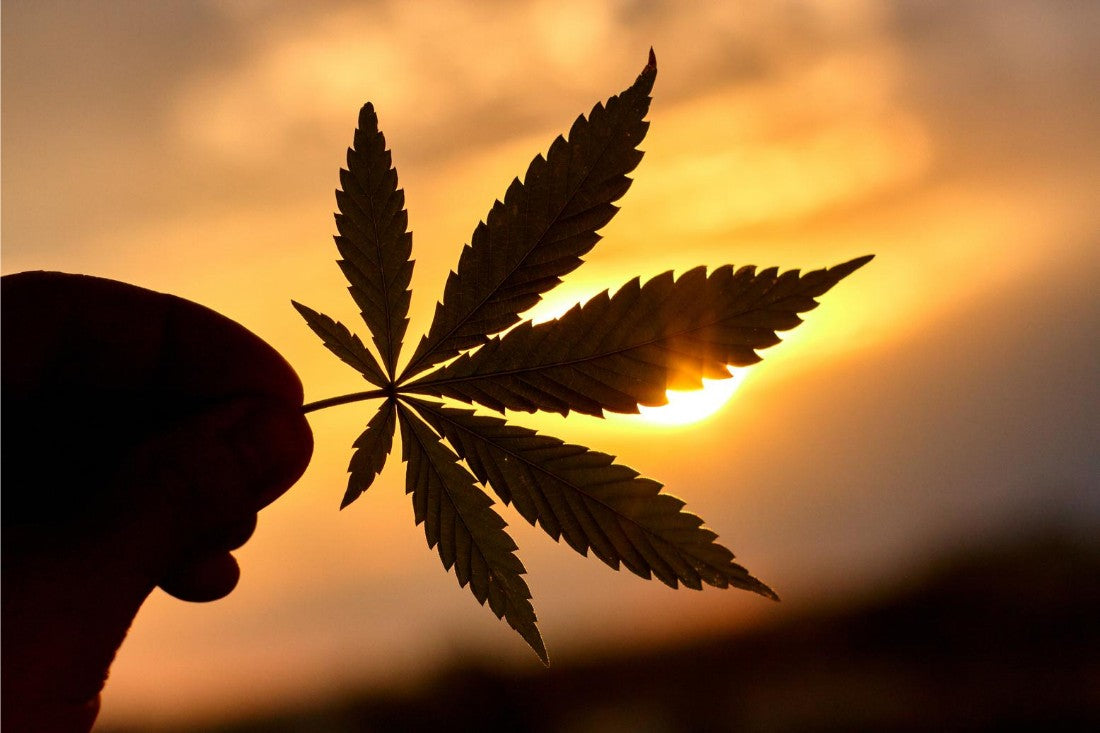Silhouette of a Marijuana leaf against the sun
