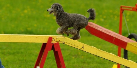 Plank Walking During Agility Dog Training