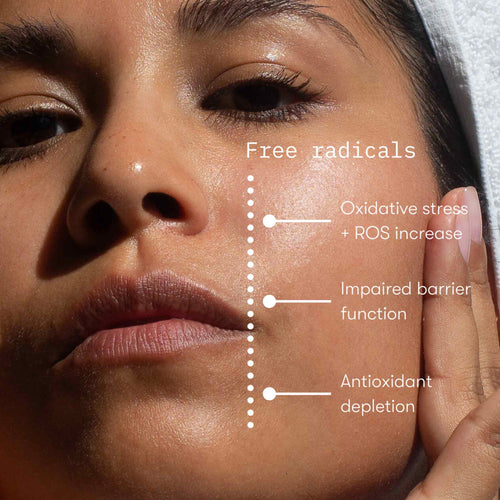 Plant Dpt. Skincare the science of pollution on skin diagram