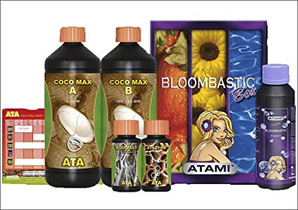 BLOOMBASTIC BOX ATA - Coco