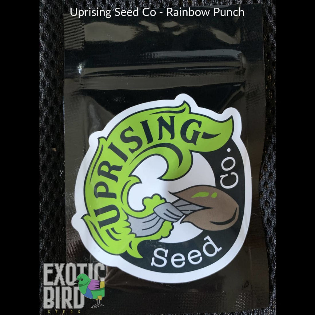 Uprising Seed Co - Rainbow Punch @ Exotic Birdseeds