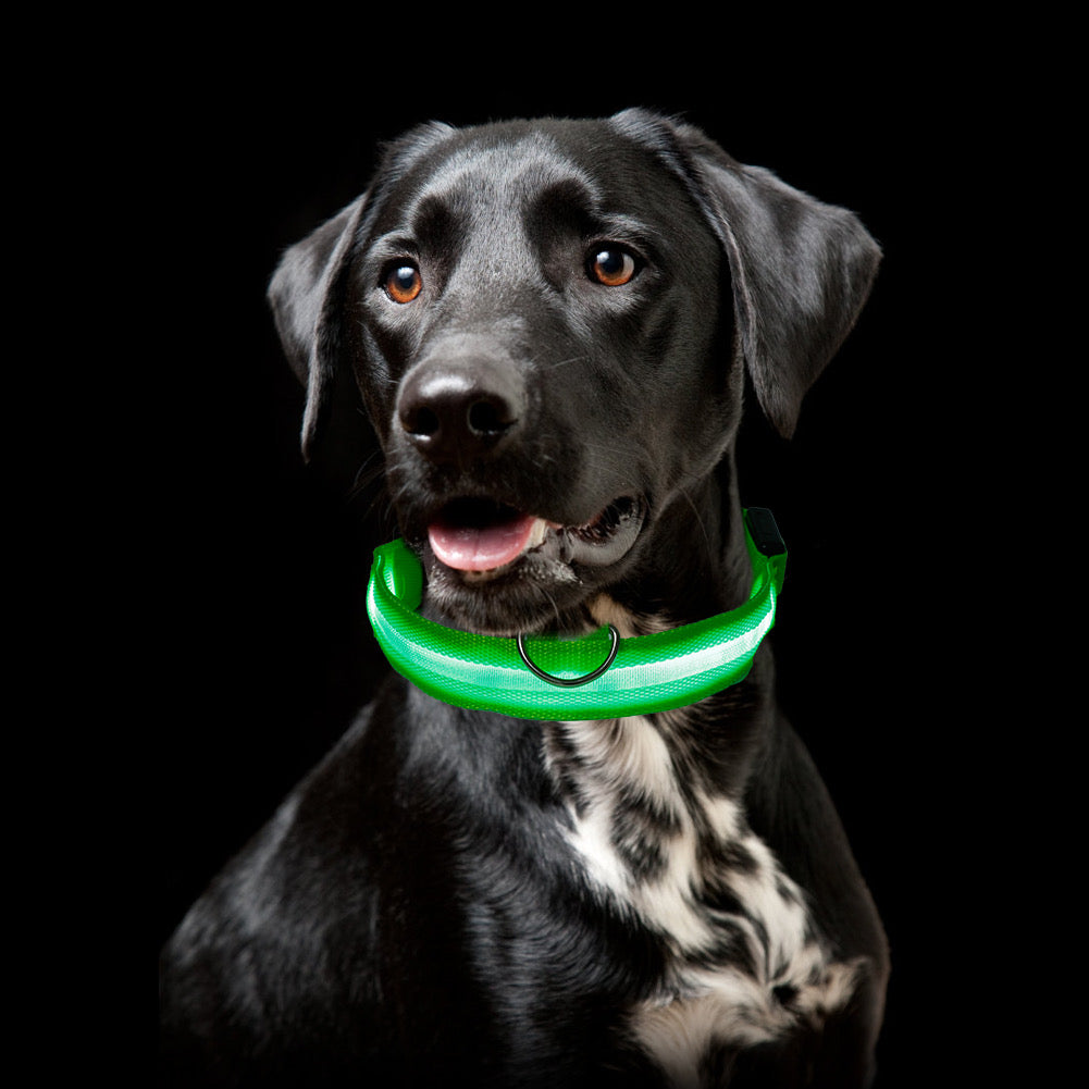 Protect and Luv your Lab on  morning and evening walks and runs!   SafeLab Glow In The Dark LED Nylon Collar In Multiple Colors.