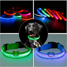 Load image into Gallery viewer, Protect and Luv your Lab on  morning and evening walks and runs!   SafeLab Glow In The Dark LED Nylon Collar In Multiple Colors.