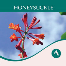 Load image into Gallery viewer, Honeysuckle