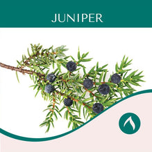 Load image into Gallery viewer, Juniper