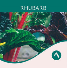 Load image into Gallery viewer, Rhubarb