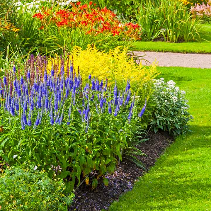 Assorted Perennials in a garden bed, with green grass in the foreground and path at the back