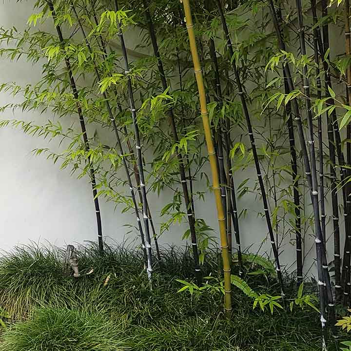 Japanese inspired garden with bamboo and grass