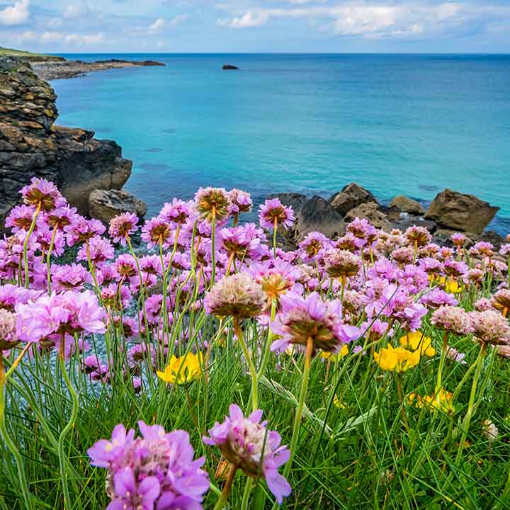 the sea, rocks on the left side with purple and yellow daisy-like flowers in the foreground
