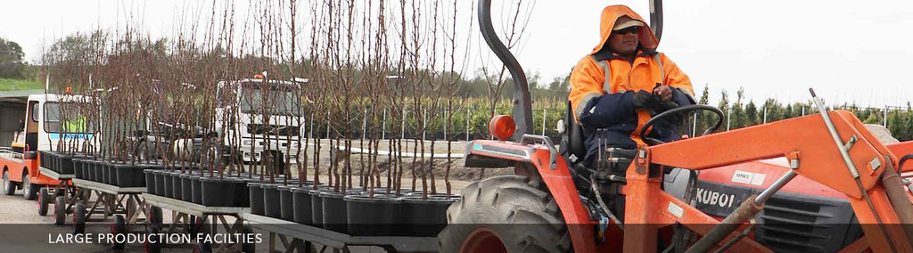 Close up of a worker on the tractor with trays of potted bare root trees.