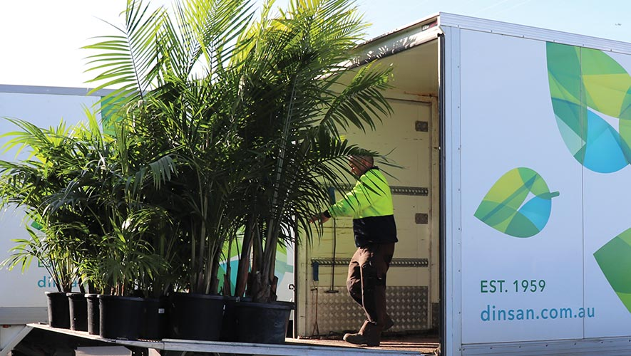 Dinsan Delivery Truck loading a selection of palms into the back