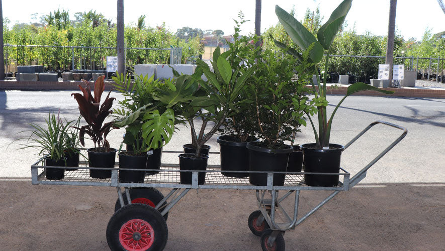 Shopping trolly with a selection of plants