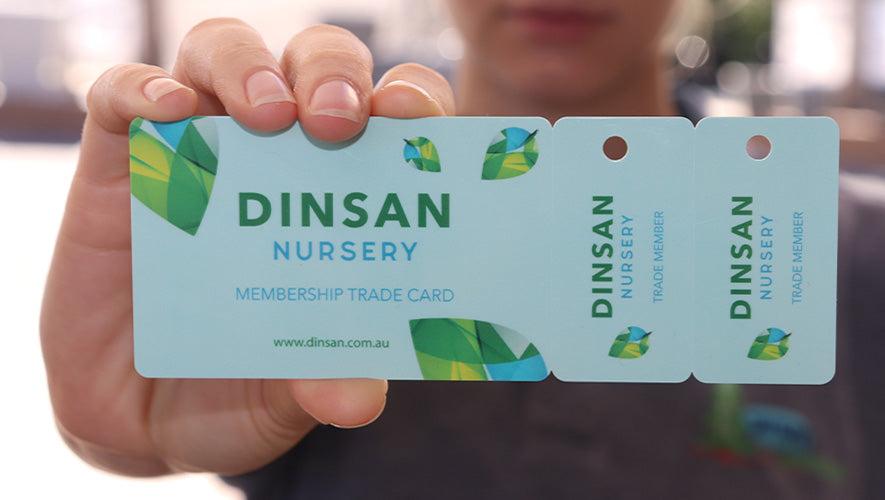 Hand holding Dinsan Nursery trade registration card