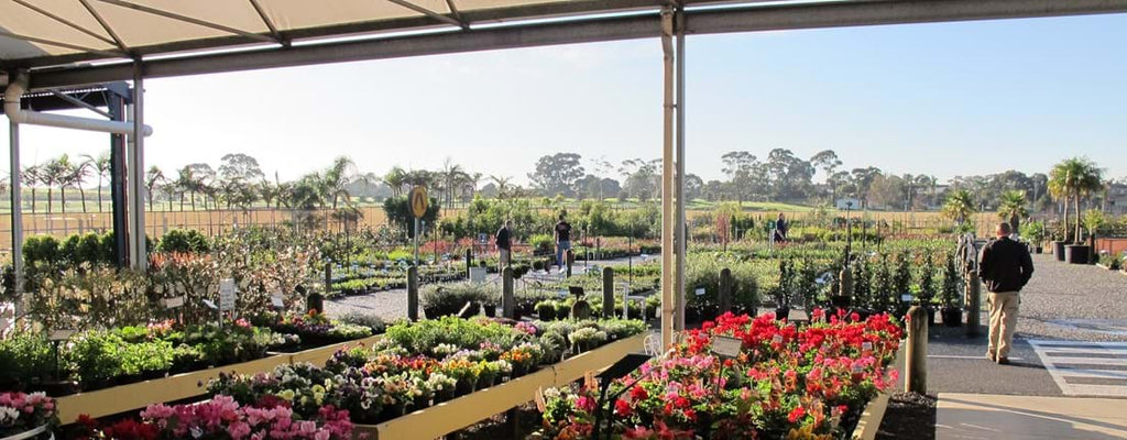 Trade Market Selling Area looking out at Nursery Plants