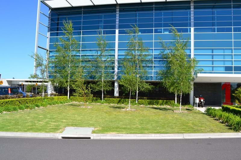A photo of the gardens at Simplot Australia featuring Dinsan Nursery's quality wholesale plants.