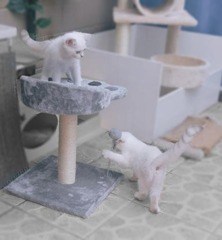 POILS BEBE CAT SCRATCHING POST AND TREE