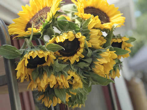 Sunflowers: 40 Stems/$1.45 Per Stem (BULK)