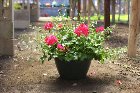 Seasonal Pick: Hanging Basket