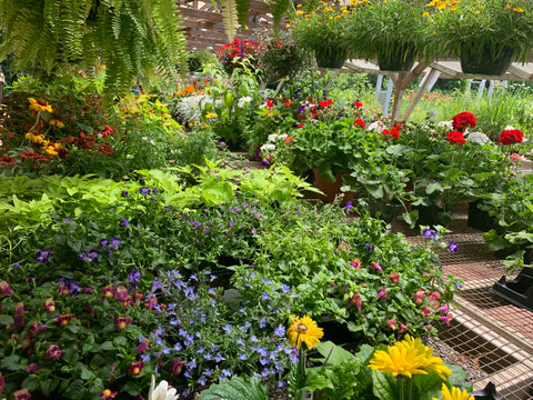 Seasonal Pick: Designer's Choice Potted Annuals