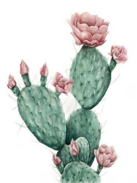Opuntia Cactus paint by numbers