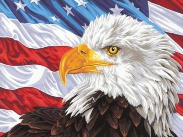 paint by numbers american flag eagle