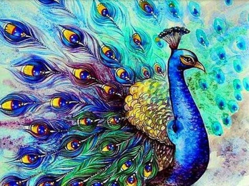 paint by numbers beautiful peacock