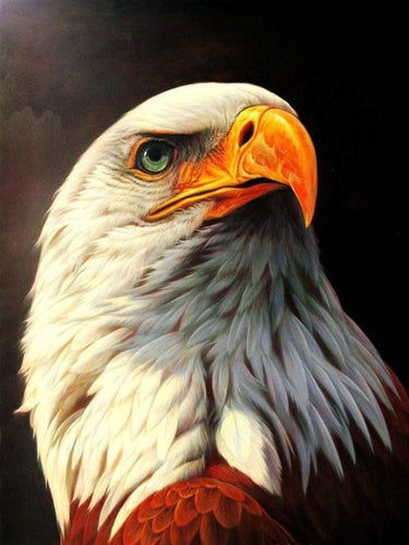 Paint by numbers Eagle