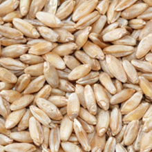 Load image into Gallery viewer, Wheat - Durum - $2.49 per lb