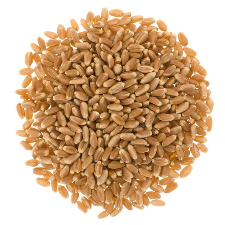 Wheat - Durum - $2.49 per lb