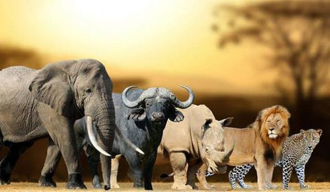 The big five Africa