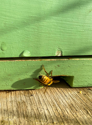 Bee Entering Hive