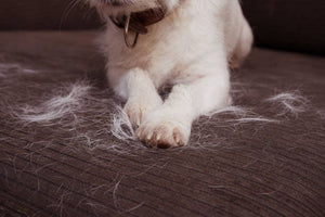 pet hair dog hair on couch