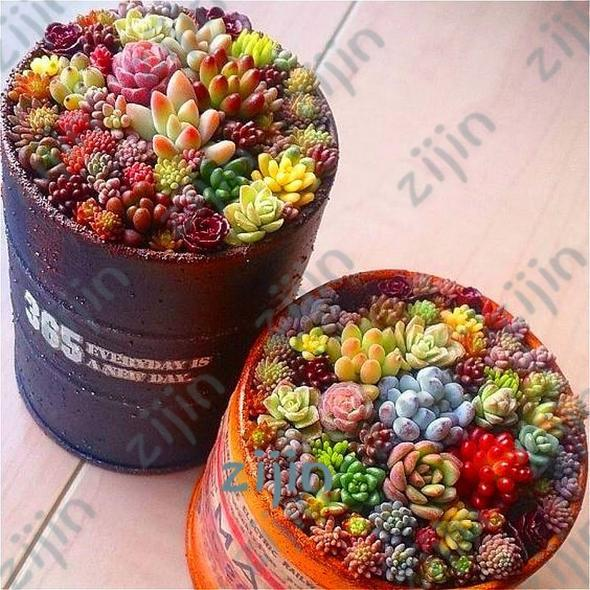Beauty Mixed Mini Lithops - 200 SEEDS