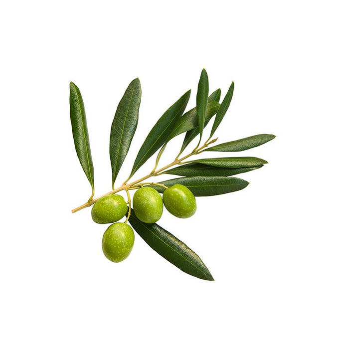Health Benefits of Olive Leaf Extract