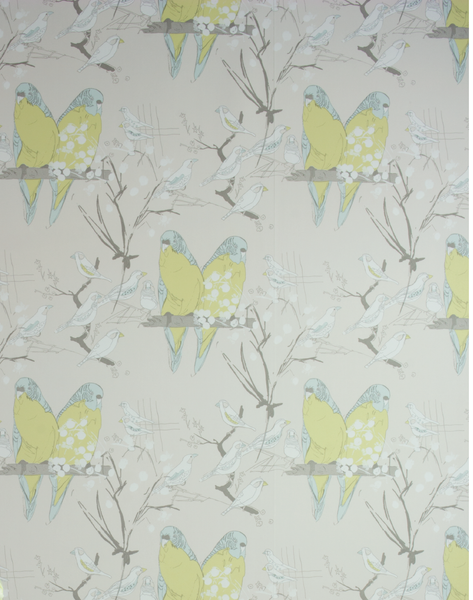 Budgie, Lime & Blue